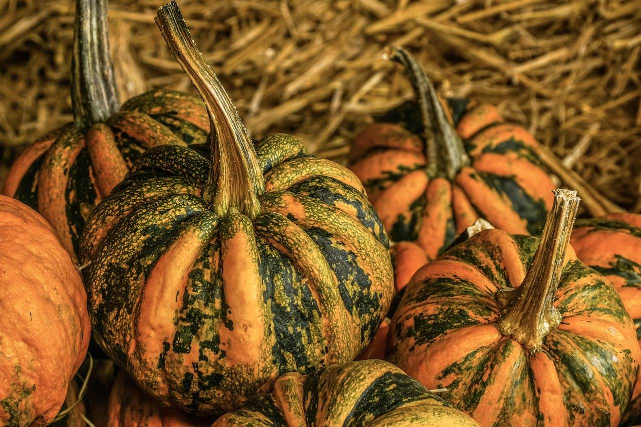 pumpkin,harvest time,sale,decoration,benefit from,pumpkin yard cordes,thanksgiving,farm,autumn,squash,gourd,pumpkin soup,september,